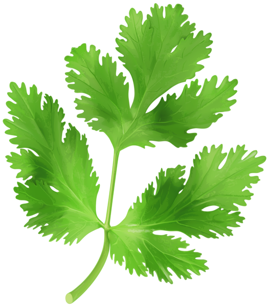Parsley_Transparent_PNG_Clip_Art_Image.png